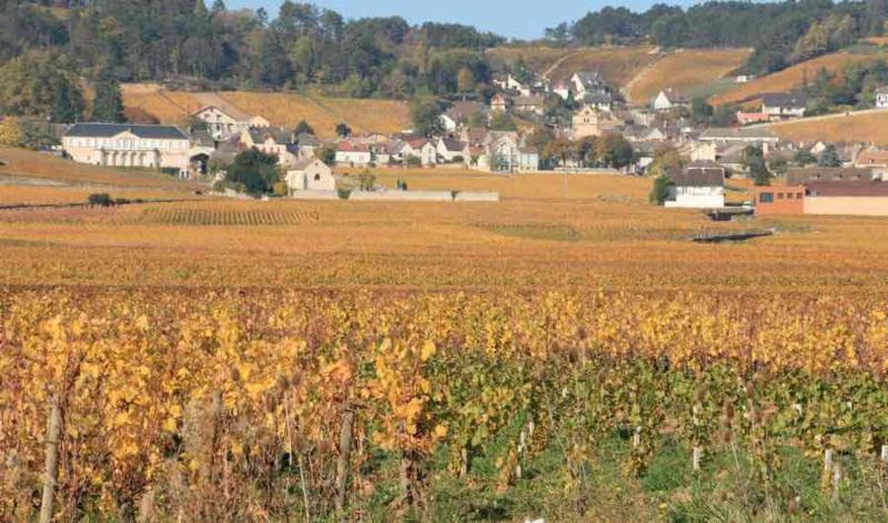 Volnay in the Autumn